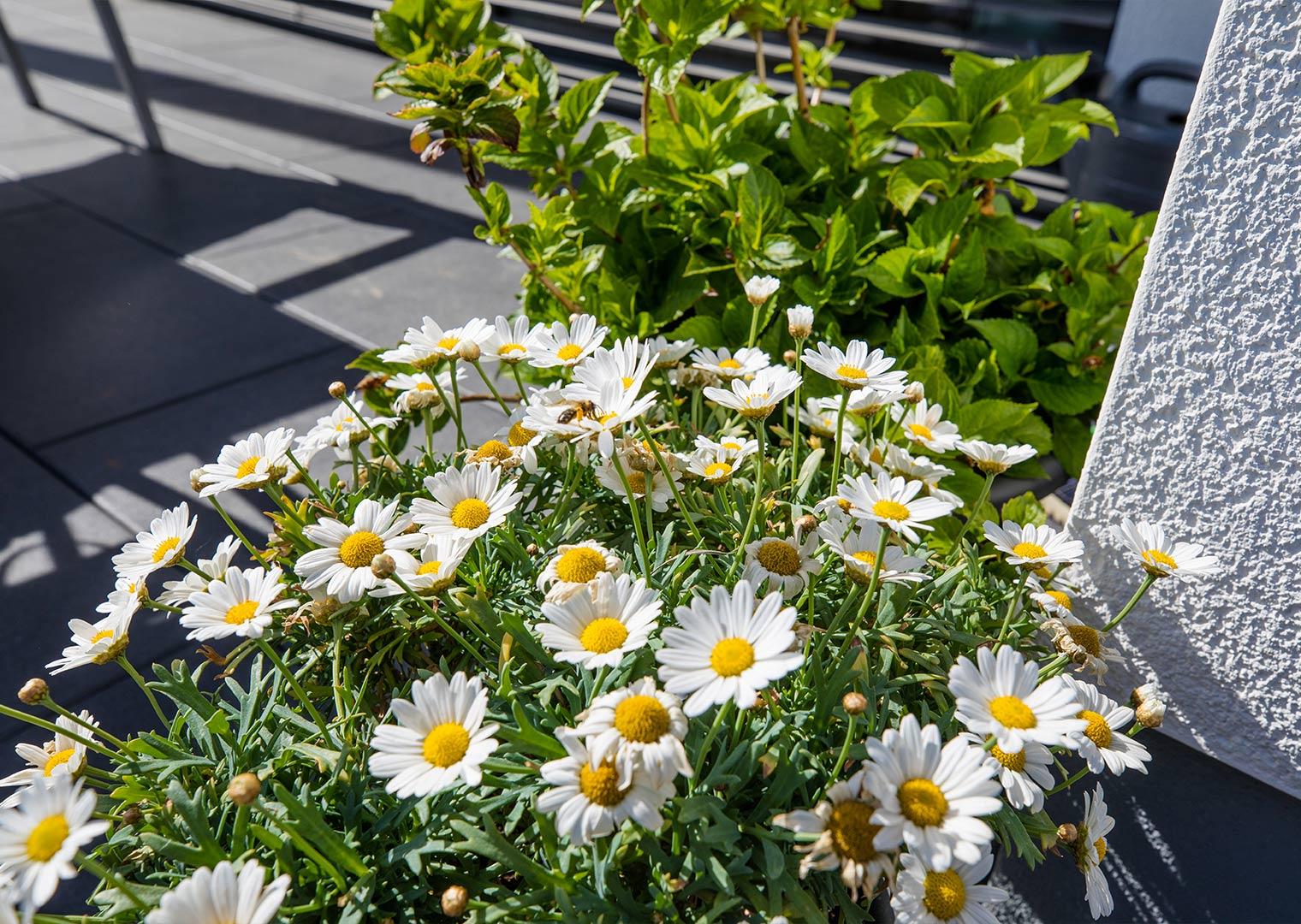 Link zur Bilddatei: koetter_galabau_landschaftsbau_soest_rasen_und_bepflanzung_galeriebild_04