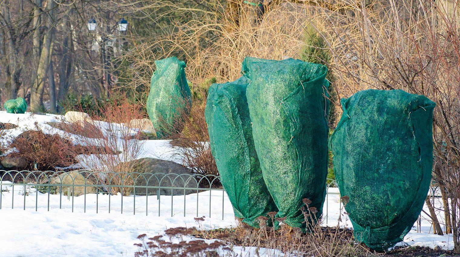 Gartenarbeiten im Winter: Bäume durch fachmännisches einpacken schützen