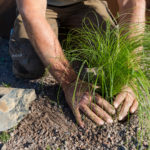 Bodenverbesserung im eigenen Garten