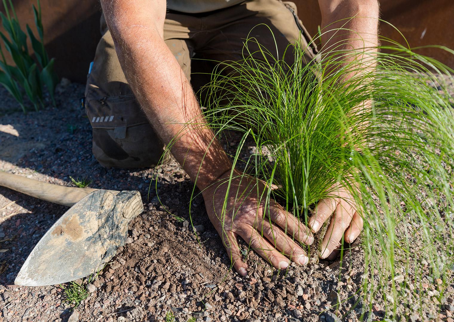 Bodenverbesserung: Gründüngungspflanzen